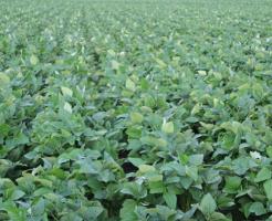 枝豆 栽培 消毒 時間