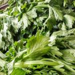 セロリが苦手な野菜として挙げられる理由とは?食べ方は?