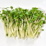 ブロッコリースプラウトって何?その栄養分や効能は?効果的な食べ方とは?