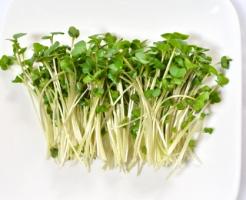 ブロッコリー スプラウト 栄養 効能 効果