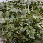 ブロッコリーの新芽!栄養価は?