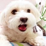 犬にセロリを与えても大丈夫?食べることによって栄養効果を得られるの?