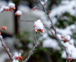 梅 冬 育て方