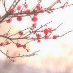 梅の名前の意味は?縁起や歴史の話もご紹介!