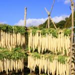 大根の収穫時期は?なるべく雨にあてずに大根を干すのに適した時期は?