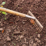 ニラの栽培!適した土とは?