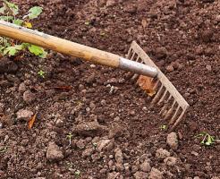 ニラ 栽培 土