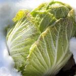 冬の甘い白菜の栽培方法について!コツは?