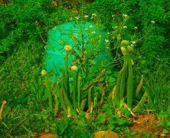 玉ねぎ 花 時期 収穫 方法