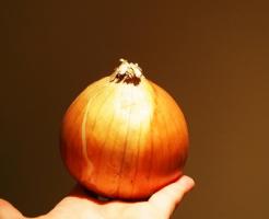 玉ねぎ そのまま 植える