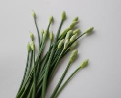ニラ 花 収穫 時期 毒 食べられる