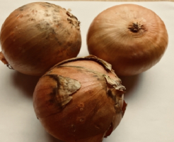玉ねぎ 黒カビ 毒性 防除