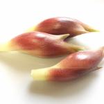 ミョウガの根株はどう植えるの?根詰まりはどうする?保存では乾燥注意?!