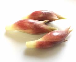ミョウガ 根株 詰まり 保存 乾燥