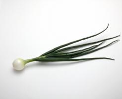 玉ねぎ 葉 栄養 食べ方