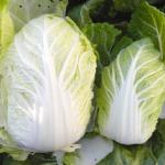 白菜の品種!小さいのは?