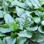 ほうれん草の農薬で害虫駆除はできるの?無農薬での害虫駆除対策は?