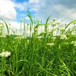 ニラの栽培!必要な肥料の種類と与える時期は?