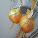 マンションのベランダで玉ねぎを長く保存する方法は?他の方法は?