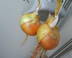玉ねぎ ベランダ 保存 方法