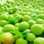 日本の梅の生産量はどれくらい?どこが産地のトップなの?