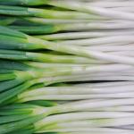 長ネギの緑色の部分はどこまで使える?切り方は?