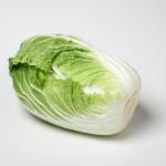 無双白菜の特徴は?育て方について!