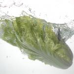 白菜に含まれる水分の割合とは?栄養は?