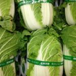 白菜が流通している季節とは?その値段について!