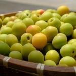 梅の果肉の成分は?アク抜きは必要?