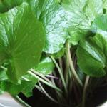 わさびの茎と葉に含まれる栄養は?食べ方について!