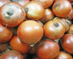 玉ねぎ 栽培 北海道 割合