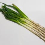 長ネギの葉には白い部分にはない栄養がある?!その効果とカロリーについて!