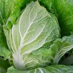 白菜を育てる方法!追肥の回数や量などについて!