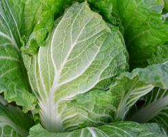 白菜 方法 追肥 回数 量