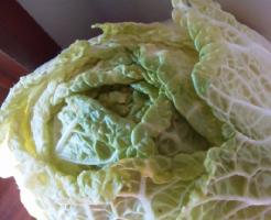 白菜 常温 放置 保存 カット