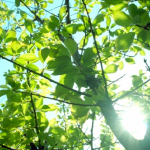 梅とプラムで受粉は可能?受粉は難しい?