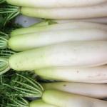 大根の生食に適している部位は?栄養価はある?
