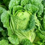夏の時期に作る白菜の栽培方法とは?保存方法は?