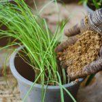ニラの栽培!ニラの種類は?植え付けと追肥の時期は?