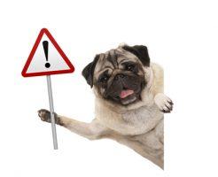 ニラ 犬 症状
