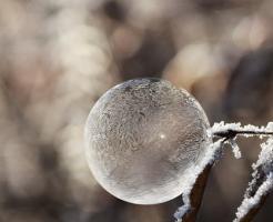 モロヘイヤ 栽培 越冬